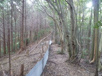 P1280284植林沿い.JPG