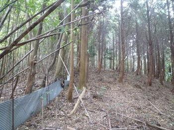 P1280286植林沿い.JPG