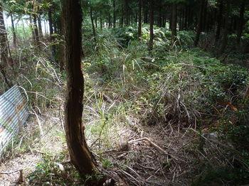 P1280315三角点ピーク・ヒノキ植林.JPG