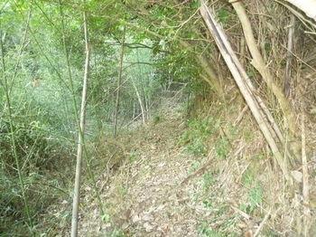 P1280386竹林沿い.JPG