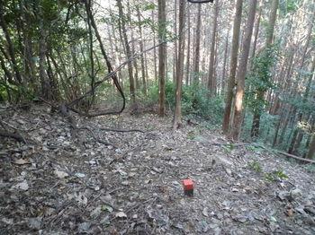 P1280427右にヒノキ林帯.JPG