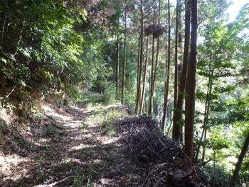 P1280436植林沿い.JPG