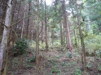 P1280489ヒノキ植林谷を詰める.JPG