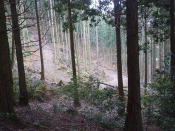 P1280775右植林谷に延びる林道.JPG