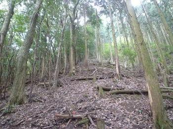 P1280778植林境尾根の厳しい急登.JPG
