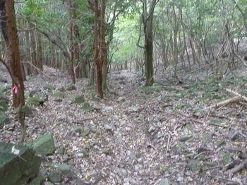 P1280857ガレ石の多い山道・左植林.JPG
