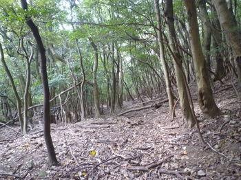 P1280859雑木疎林.JPG