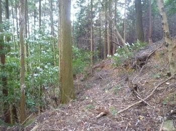 P1280864植林沿いの幅広山道.JPG