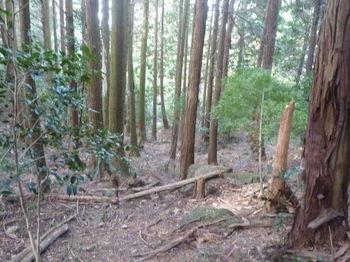 P1280869植林内の踏み跡.JPG