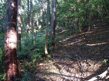 P1280904植林沿い.JPG