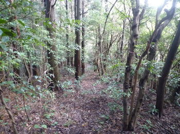 P1280933植林境下り.JPG