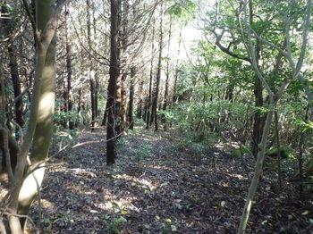 P1280937植林境.JPG