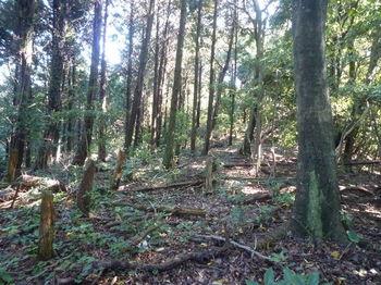 P1280951植林境上り.JPG