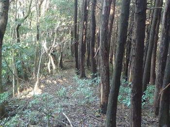 P1280963植林境下り.JPG