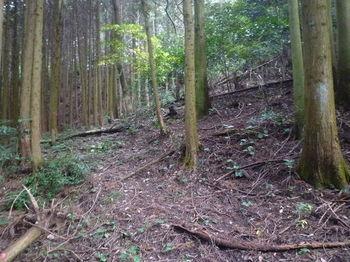 P1290033左に山道.JPG