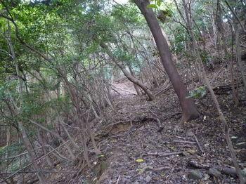 P1290040左へ巻き加減の山道.JPG