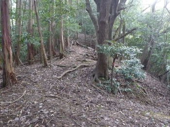 P1290041植林境尾根へ出る.JPG