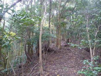 P1290049植林境尾根.JPG