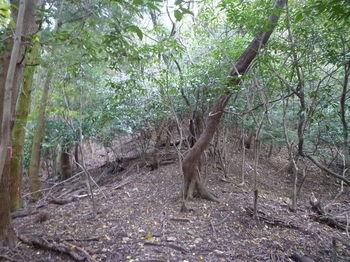 P1290050植林沿いに左へ巻く.JPG