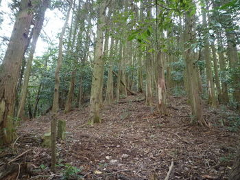 P1290060ヒノキ植林出合い・コン杭.JPG