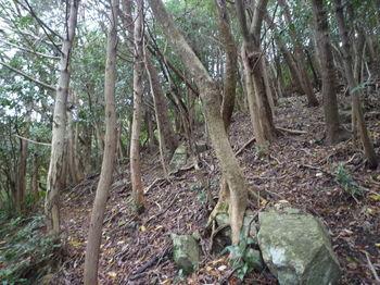 P1290064雑木の多い尾根を直登.JPG