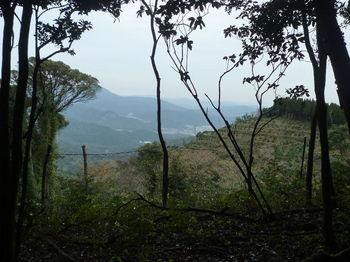 P1290092右の樹間に伐採地.JPG