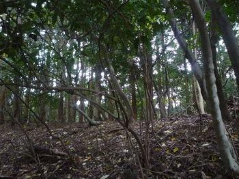 P1290193植林尾根と出合う.JPG