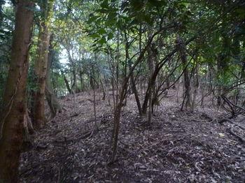 P1290195植林境をトラバース.JPG