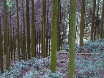P1290197下方に舗装林道.JPG