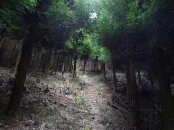 P1290208尾根上の山道.JPG
