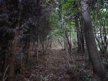 P1290235植林境.JPG