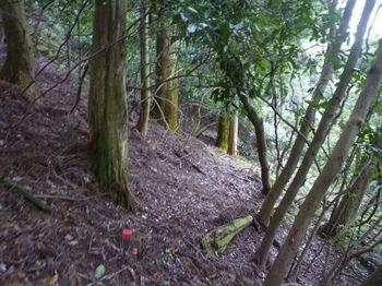 P1290237植林境の踏み跡.JPG