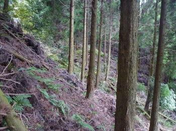 P1290245植林斜面.JPG