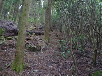P1290254植林境.JPG