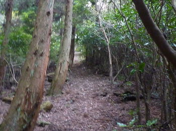 P1290256植林境.JPG
