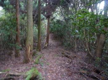 P1290262植林境.JPG