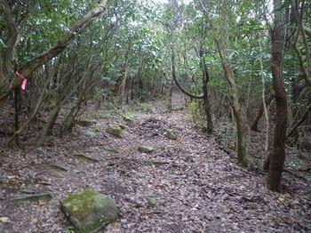 P1290278登山道.JPG