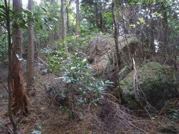 P1290300植林境.JPG