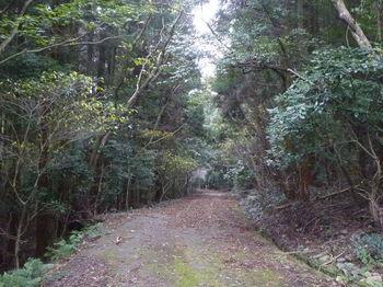 P1290328舗装林道.JPG