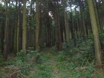 P1290349植林尾根・山道.JPG