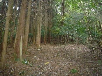 P1290354植林沿い.JPG