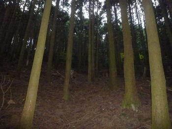 P1290359植林斜面・踏み跡.JPG