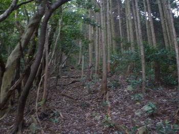 P1290366植林境.JPG