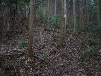 P1290367植林境・溝道.JPG