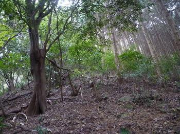 P1290372右植林境.JPG