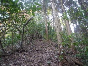 P1290373植林境.JPG