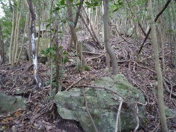 P1290387岩が目立つ疎林尾根.JPG