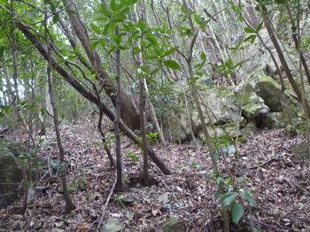P1290388岩の間を進む.JPG