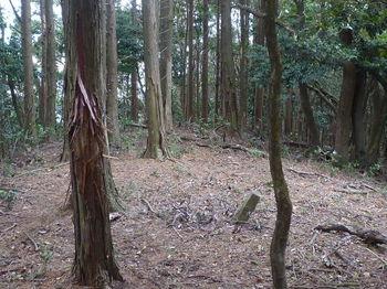 P1290444植林境・コン杭.JPG