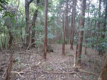 P1290458植林境.JPG